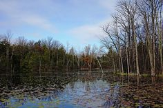 Morning Spring Pond - Puslinch Ontario Canada #art #photography #pond #spring #reflections #trees #lilypads