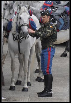 Police horse in Spain. If you get to ride an andalusian for work maybe I should become a police officer in Spain lol.