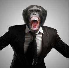 Narcissists and the Monkey Dance.  One of the best decisions I ever made was when I decided to ignore the monkey in my family and his 'dances'. :)
