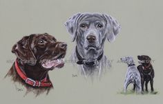 weimaraner bitch and her half lab son!  for commissions, prints, cards and originals  http://www.nicvickeryanimalartist.com/