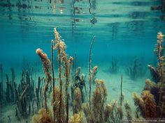 Underwater HD desktop wallpaper : High Definition : Fullscreen 1920×1080 Wallpapers Under Water (50 Wallpapers)   Adorable Wallpapers
