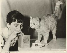 Mouschi, the tabby cat who lived in the Secret Annexe of Anne Frank's family; it was actually Peter van Pels (aka Peter Van Daan)'s cat. Pictured is actress Millie Perkins and cat actor in movie Diary of Anne Frank. Anne Frank, Manx Cat, 6th Grade Reading, Pusheen Cat, Cat Boarding, All About Cats, World War Ii, Wwii, Bergen