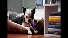 Beneficios del Perro como un Compañero de Trabajo II- TvAgro por Juan Go...