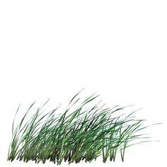 tall grass texture. Tall Grass - Google-søk Texture