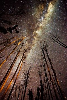 Milky Way / starry sky / space skyscape / the cosmos / space nerd