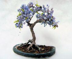 11 Best Wishlist images | Red maple bonsai, Nickolas muray