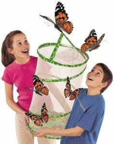 Butterfly Pavillion -- Watch Caterpillars Become Butterflies