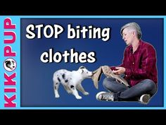 STOP puppy BITING clothes - YouTube