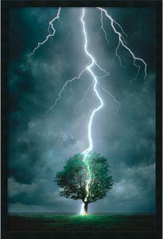 """0-028798>37x25"""" Lightning Striking Tree Framed Art Gel Coated"""