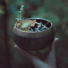 A toi, divine Nature, à ta sublime mélancolie, à ton âge mûr et ta touchante humilité, toi qui sait que tout n'est que fin et mystérieux recommencement,  je lève ma coupe vers tes feux, embrasement de tes jours passés, la nuit gagne et je prends conscience. (texte Artio>  lacavernedartio.over-blog.com) Mabon • Autumn Equinox