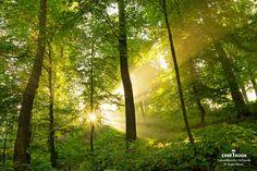 """""""Leichter Dunst in der Luft macht hier die Sonnenstrahlen auf besondere  Art und Weise sichtbar. Aufnahme entstand am Katharinenberg bei  Wunsiedel (Fichtelgebirge, Bayern).""""  © Juergen Mayer"""