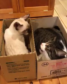 Any cats and kitten that are cute. See more ideas about Cute cats, Cute kittens … Any cats and kittens that are cute. See more ideas about Cute cats, Cute kittens Tags: Cute Kittens, Cute Little Kittens, Cute Little Animals, Cute Funny Animals, Funny Dogs, Funny Animal Videos, Funny Animal Pictures, I Love Cats, Crazy Cats