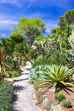 Massif avec palmier recherche google jardin exotique pinterest - Massif avec palmier ...