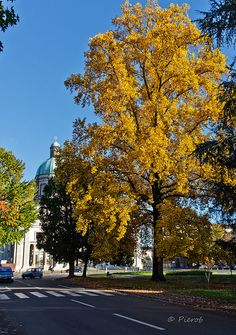 Vercelli in autunno Piemonte Italy