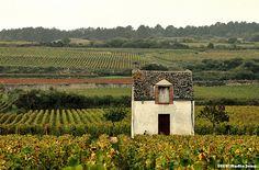 Mundus Vinus: Bourgogne: Erosão mudando fundamentalmente o seu t...