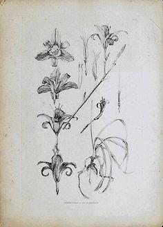 Mucha, Documents décoratifs (1902) — signes
