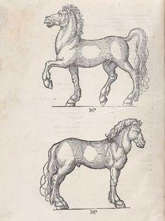 Laurentius Rusius, Hippiatria. (Paris: C. Wechel, 1532).