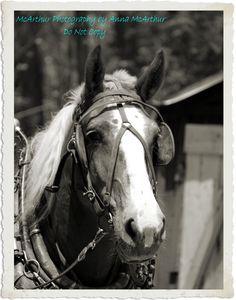 The Horses 5/2013