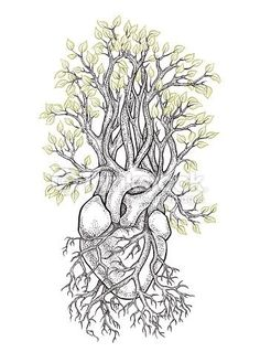 Human anatomical coronary heart with veins like roots, from which grows a tree.... ** See more by visiting the picture