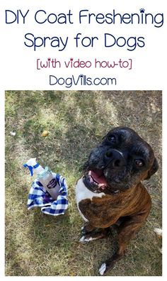 Here's an easy dog DIY for you! Get rid of stinky fur with this coat freshening spray, with video tutorial! Works on all your dog stuff too!