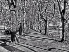 Greyscale Photography Photograph - The Avenue Of Limes In Greyscale by Joan-Violet Stretch