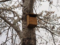 Caja nido para lavanderas, colirrojos y petirrojos.   www.lagranjadebitxos.com Bird, Outdoor Decor, House, Home Decor, Nesting Boxes, Robins, Birds, Homemade Home Decor, Haus