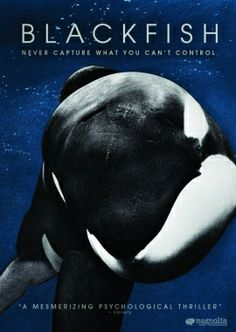 Blackfish: A Movie Review   Her Campus