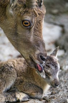 <3 <3 Lovely Creatures, Wild Creatures, Cute Baby Animals, Farm Animals, Wild Animals, Animal Babies, Most Beautiful Animals, Animals Of The World, Animal Kingdom