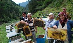 Η φήμη του ξεπερνά τα σύνορα της Τουρκίας και το όνομά του έχει συνδεθεί με ένα εκλεκτό (και πανάκριβο) προϊόν. Στο παρχάρι Ανζέρ, στο ... Honey Drops, Bee Keeping, Bali, Greek, Products, Greece, Gadget