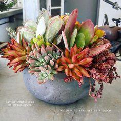 Colorful succulent arrangement by Megan Boone