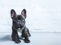 Why not choose a French dog name for your new furry best friend? Like Spanish pet names; Pet Names For Dogs, Dogs Names List, Puppy Names, French Dog Names, French Dogs, Black And White Dog, White Cats, Black Dog Names, Cute French Bulldog