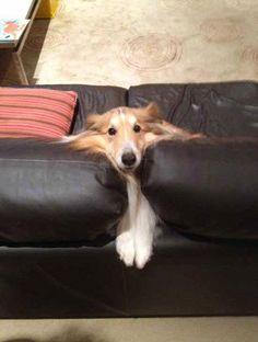 hond-kat-meubel6