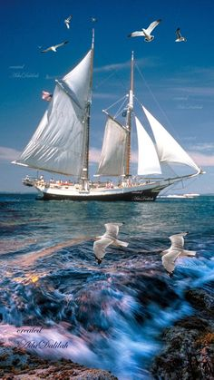 Beautiful Nature Pictures, Beautiful Landscapes, Sailboat Yacht, Boat Art, Cool Boats, Gulls, Tropical Beaches, Sea Waves, Anime Scenery