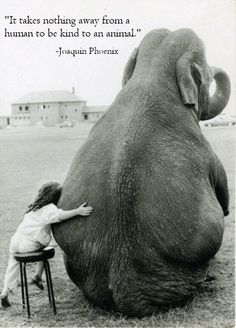 """""""It takes nothing away from a human to be kind to an animal."""" Joaquin Phoenix in Earthlings"""