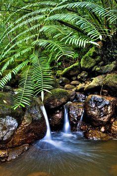 Tropical Pond by Warren Ishii, via 500px