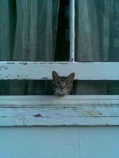 https://flic.kr/p/6phpxn | window cat