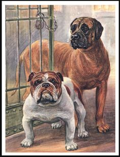 MASTIFF AND BULLDOG DOGS ON LOVELY DOG PRINT POSTER