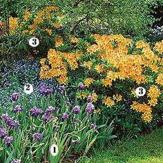 4 massifs fleuris pour le printemps - Couleurs complémentaires : Azalées, iris et myosotis
