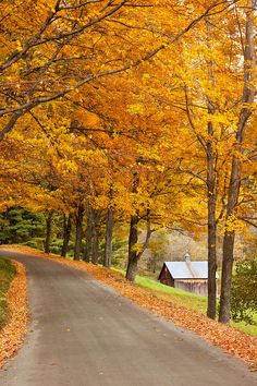 Country lane in autumn near Woodstock, Vermont,