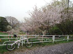 ©ロワ蔵さま / Mu XXV 2008年 / ネットを通じて知り合ったたくさんの自転車女子と横浜で女子会をしようと計画しました。DAHONで輪行して下見ライド。コースには、DAHONを手に入れてすぐの時には、のぼれなかった激坂。今回は足を止めずのぼりきりました。高台から見えるあちこちの桜と満開のチューリップ、そして風が吹く毎のたくさんの桜の花びらが迎えてくれました。女子会当日は悪天候で残念ながら中止となってしまいましたがリベンジします。またDAHONで。