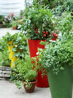 Select containers of different sizes and create a grouping to offer additional interest. These four containers filled with cucumber, tomato, pepper, basil, thyme, and parsley add lots of visual appeal to a landscape