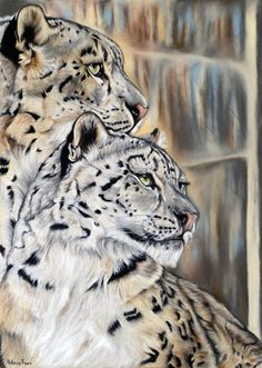 Dessin d'une panthére des neiges réalisé au pastel sec.Drawing of snow leopard realized in the soft pastel. ©Hélène Roux http://www.artmajeur.com/heleneroux/