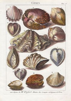 AM on The Present Tense: Crazy Days + Antique Shells Crazy Day, Shell Art, Fauna, Natural Forms, Pictures To Paint, Science And Nature, Sea Creatures, Botanical Prints, Natural History