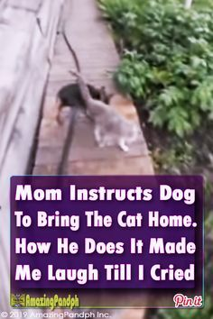 Animal humour - If there wasn't for the video proof I never would have believed this really happened! What the Dog Pets Cat Home Hilarious Funny Animal Humour, Cute Animal Memes, Animal Antics, Cute Animal Videos, Cute Animal Pictures, Cute Funny Animals, Funny Dogs, Cute Cats, Bull Mastiff Puppies