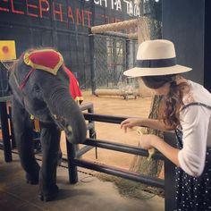 Instagram의 Ye Jung Ryu님: . . 순간 막 다가오니 놀라서 바나나가 아니라 손을 내밈 ㅡㅡ;; . . . #일상#데일리#소통#태국#태국여행#여행#방콕#파타야#농녹빌리지#코끼리#무서워