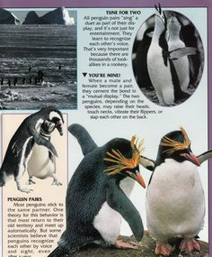 Penguin Facts | Penguin Place Penguin Facts, Customer Service, Penguins, Animals, Animales, Animaux, Customer Support, Penguin, Animal