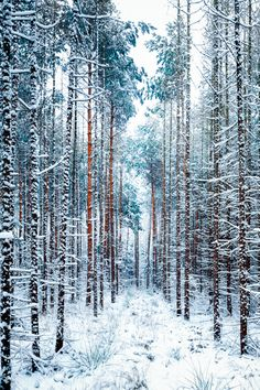 🇦🇹 Early winter in the woods (Austria) by Felix Zaussinger on xfer colour Winter Love, Winter Snow, Winter Christmas, Winter White, Winter Walk, Nature Sauvage, Snowy Forest, Snowy Woods, Winter Scenery