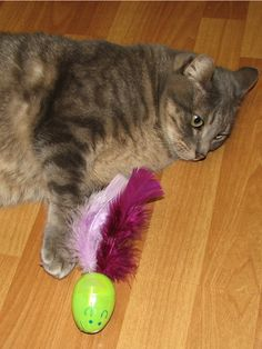 Easter time has some possible dangers to your cat with all the Easter grass, chocolate and lily's, but you can make these fun, easy-to-make cat toys so your cat doesn't feel left out. Easy and fun to make, these plastic egg mice are perfect for the active cat – the unbalance egg shape makes them move in weird ways, which cats love – and last a lot longer than hard-boiled eggs