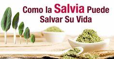 Aprenda más sobre el valor nutricional de la salvia, beneficios de salud…