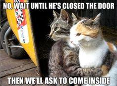 Funny Kitties!